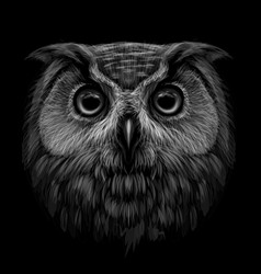 long-eared owl black and white graphic portrait vector image
