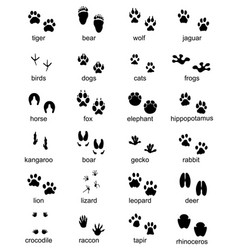 set of footprints of wild animals vector image