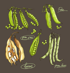 hand drawing legumes on a dark backgroun vector image