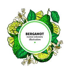 Bergamot drawing frame isolated template vector