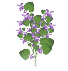 Bunch wild violet vector
