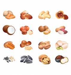 Calorie table nuts and seeds vector