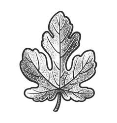 Fig leaf sketch vector