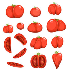 red tomatoes set vector image