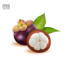 tropical fruit mangosteen with green vector image