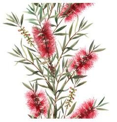 Watercolor australian callistemon seamless pattern vector
