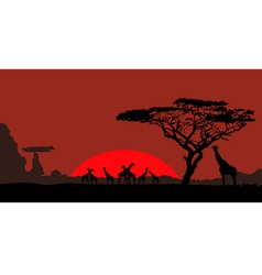 African landscape with giraffes vector image