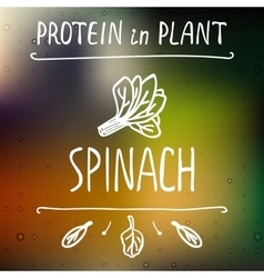 Hand Drawn Spinach Leaves vector image