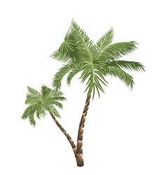 Two Palm Trees3 vector image