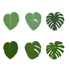 set of colorful naturalistic green leaves on vector image vector image