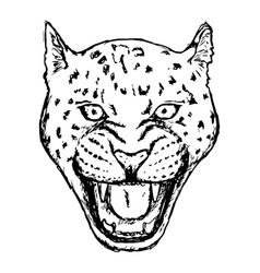 Amur leopard roar face or head hand drawn leopard vector