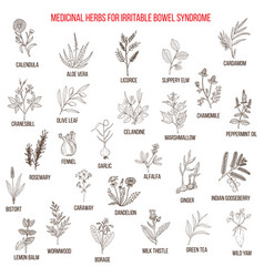 best herbs for irritable bowel syndrome ibs vector image