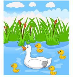 Duck cartoon swims with her four little cute duck vector