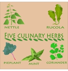 culinary herbs set vector image