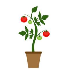 garden background growing vector image
