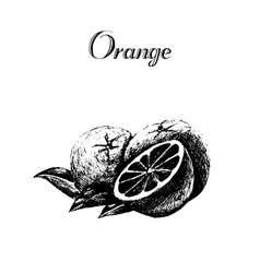 hand drawn vintage isolated orange vector image vector image