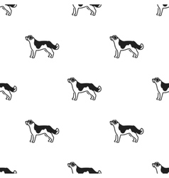 St Bernard dog icon in black style for web vector image vector image