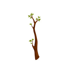 Branch tree with leaves isolated spring symbol vector