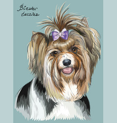 colorful hand drawing portrait of biewer terrier vector image