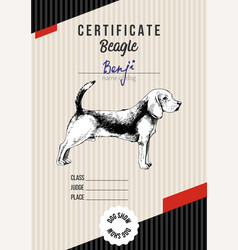dog show certificate with beagle vector image