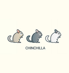flat line chinchilla pets icons vector image
