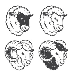 4 sheeps and rams heads vector image