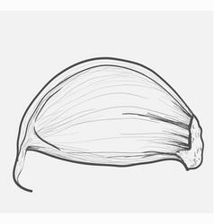 Garlic herbs hand-drawing stylegarlic herbs vector