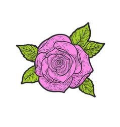 rose flower line art sketch vector image