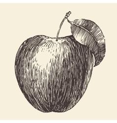 Apple Vintage Engraved Hand Drawn vector image