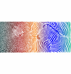 animal background with motif wild zebra and vector image