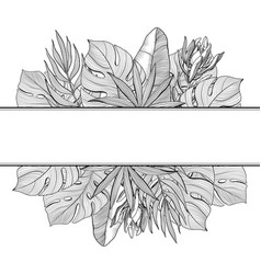 Banner border of tropical jungle palm leaves vector