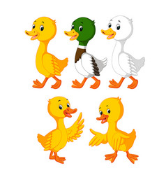 Collection of the cute ducks vector
