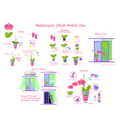 phalaenopsis moth orchid care flat style isolated vector image
