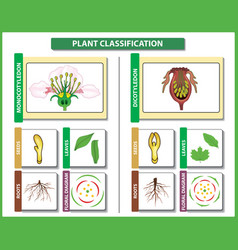 Plant classification monocots vs dicots vector