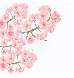 Twigs tree sakura blossoms vintage vector