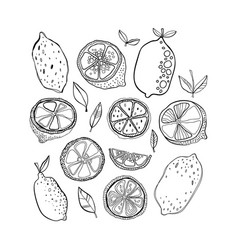 Lemons black and white citrus fruits for coloring vector