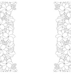 arabian jasmine outline border on white background vector image