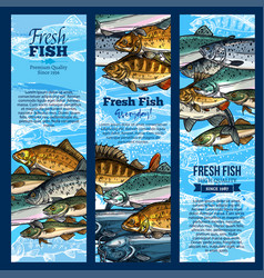 Banners of fish catch for sea food maket vector