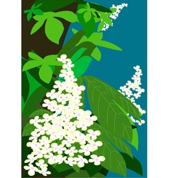 Flowering chestnuts vector image