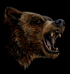 Growling bear color portrait a angry bear vector