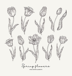hand drawn tulips spring flowers set garden vector image