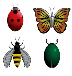 Insect set vector image