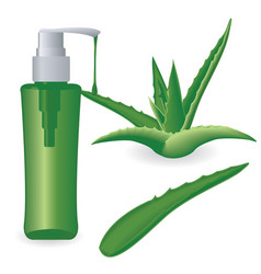 aloe vera plant and a bottle of gel vector image