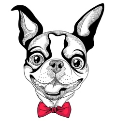 funny cartoon hipster Boston Terrier breed smiling vector image