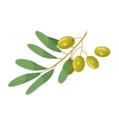 Hair oil ingredient olive green branch vector