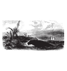 Manatee on shore vintage vector