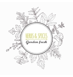 Circle label with hand drawn herbs and spices vector image