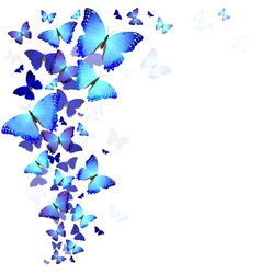 background of butterflies vector image