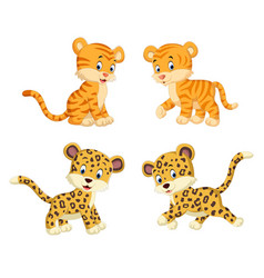 Collection of the tiger and leopard vector