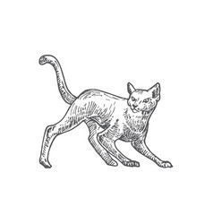 hand drawn halloween scary crawling cat vector image